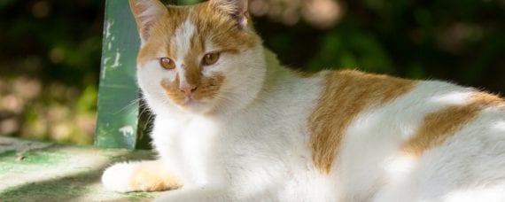 pets animal care